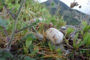 Snails all over our tent in Berat