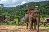 Elephant as tourist attraction