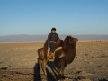 Time to go and check on the camels