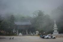 Tempel in the fog