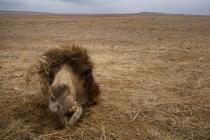 A camels head