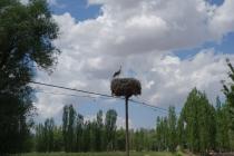 A stork!