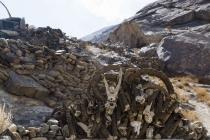 Shrine with Marco Polo sheep
