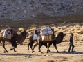 The Afghan camel caravan