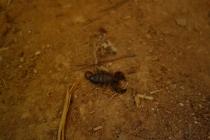 We found a scorpion