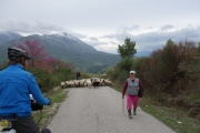 Heard of sheep