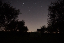Nighttime in the olive grove