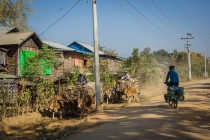 Oxcarts on dirtroad out of Pyay