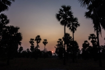Toddy trees and sunrise