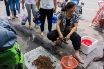 Crickets, we have heard them and seen them collected, here they are sold