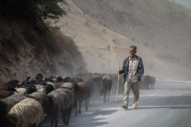 Herder coming down with his sheep and goats from the mountains