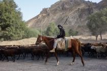Herder on horseback