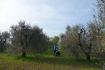 Our camping spot in the olive grove