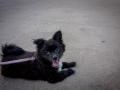 Taigom, the dog I volunteered to walk :)