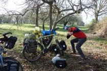 Camping at hazelnut orchard