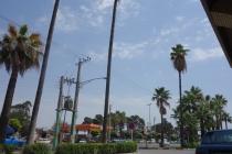 Palm trees in Gorgan