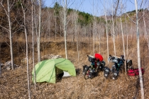 Great camping between birch trees