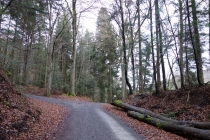 Schonbucher Wald