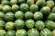 Watermelons, Hakkari