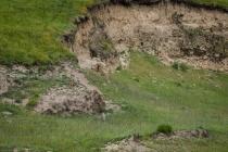 Small marmot animal