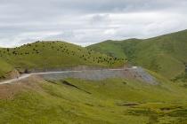 Grasslands and yak