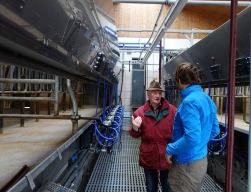 Old modern milk farming in the Swabian Alps