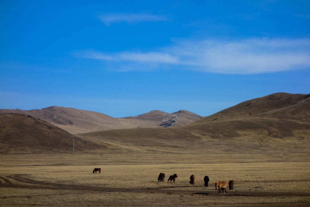 cycling the gobi