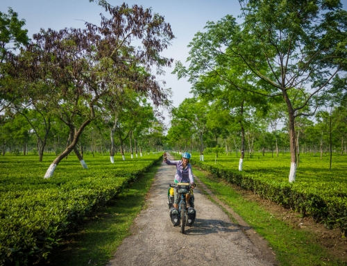 Traversing tea estates and tiger reserves in Assam and West Bengal